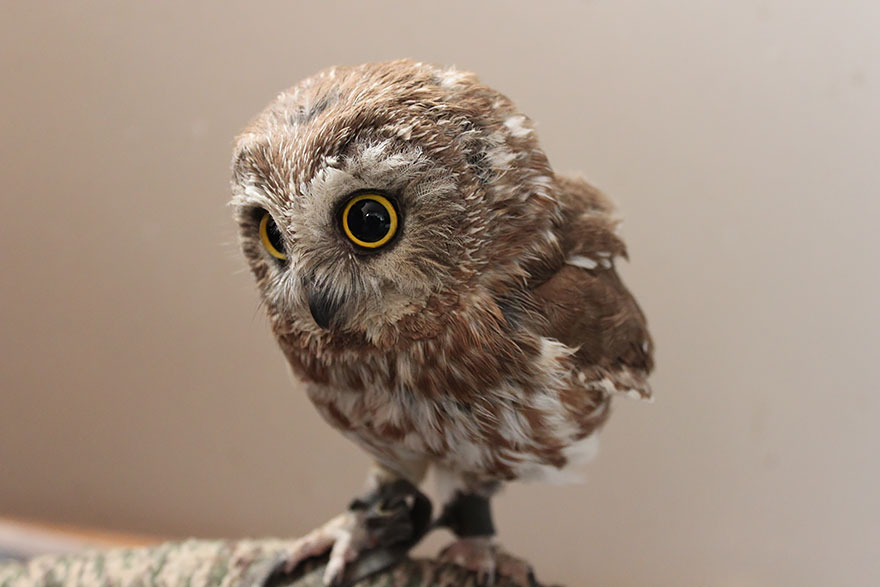 25+ Majestic Owls Caught On Camera | Bored Panda