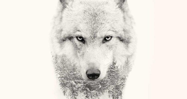 Lone Wolf - Motivational — Steemit