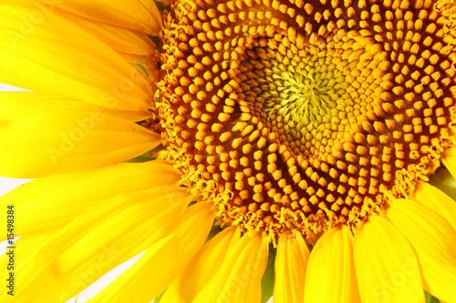 Fototapete Sonnenblume - Herz - Gemüse - Liebe - Pixteria