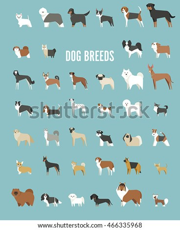 Breed Stock Images, Royalty-Free Images & Vectors ...