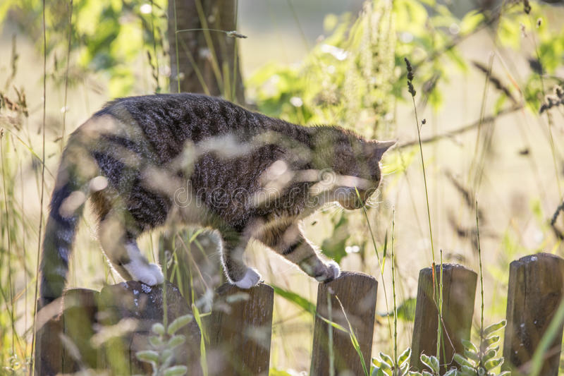 A cat walking on a fence stock photo. Image of furry ...