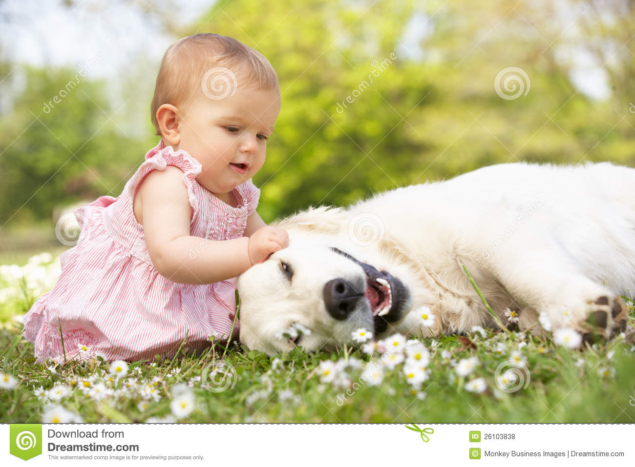 Baby Girl Sitting In Field Petting Family Dog Stock Photo ...
