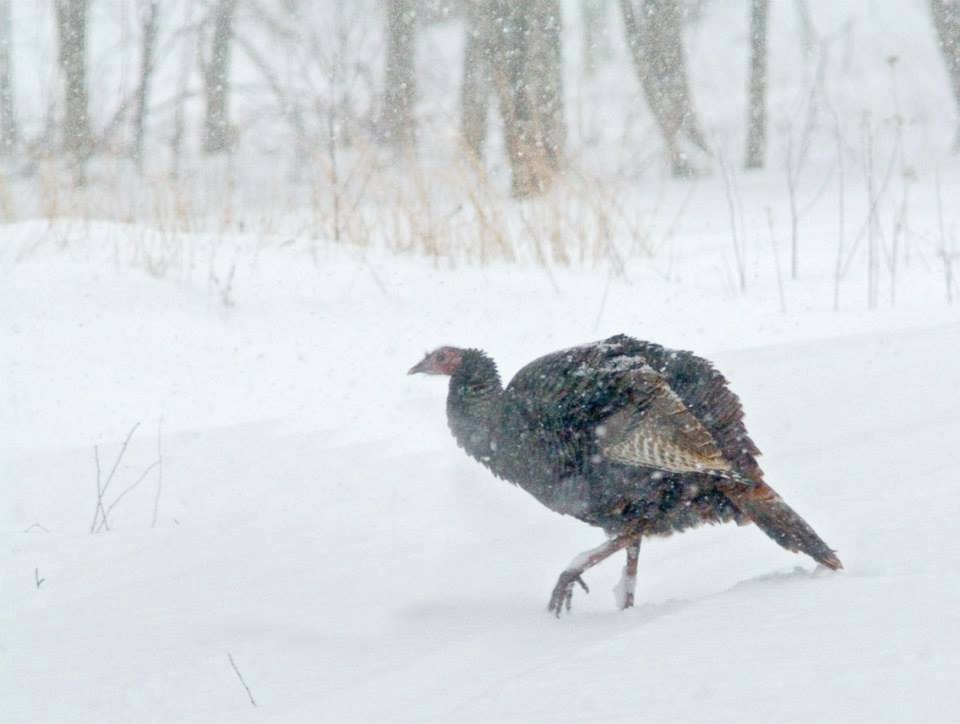 How does a harsh winter affect wildlife? | U.S. Fish and ...