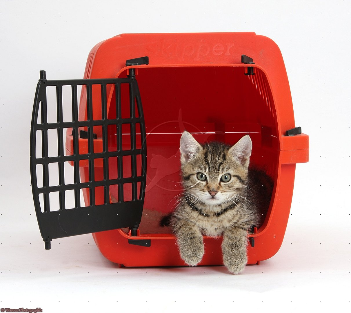 Getting a Cat Into a Cat Carrier