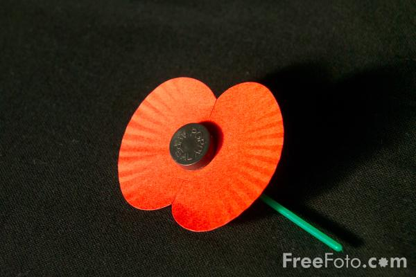 Red Poppy, Remembrance Sunday pictures, free use image, 11 ...