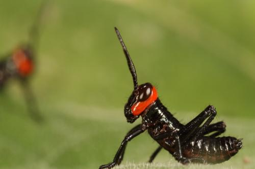 ?u=https%3A%2F%2Fwww.galerie-insecte.org%2Fgalerie%2Fimage%2Fdos77%2Fbig%2Fimg_9706.jpg