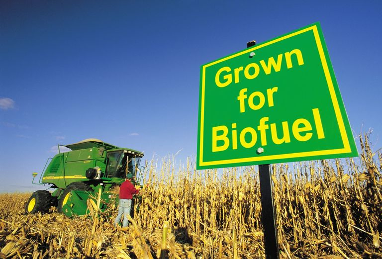 Biofuels might not be the answer... - UK Price Comparison ...