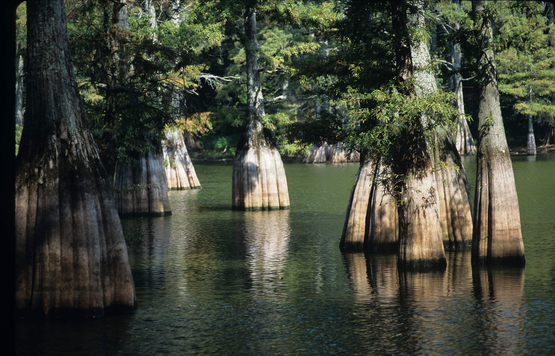 Big Thicket | National Park Foundation