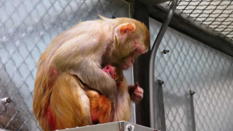 Animal Abuse - left to bleed & die at German Laboratory