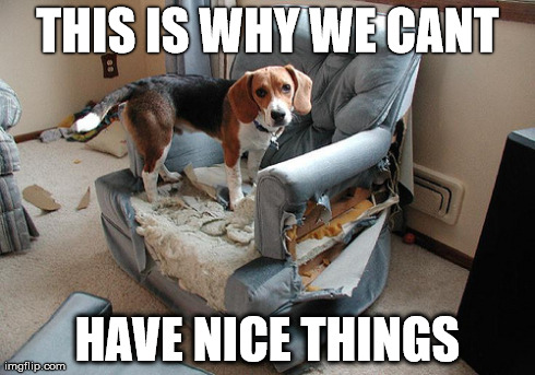11 Dog Memes: This is Why We Can't Have Nice Things ...