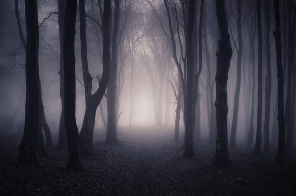 Dark Misty Woods Wall Mural Forest & Trees Photo Wallpaper ...