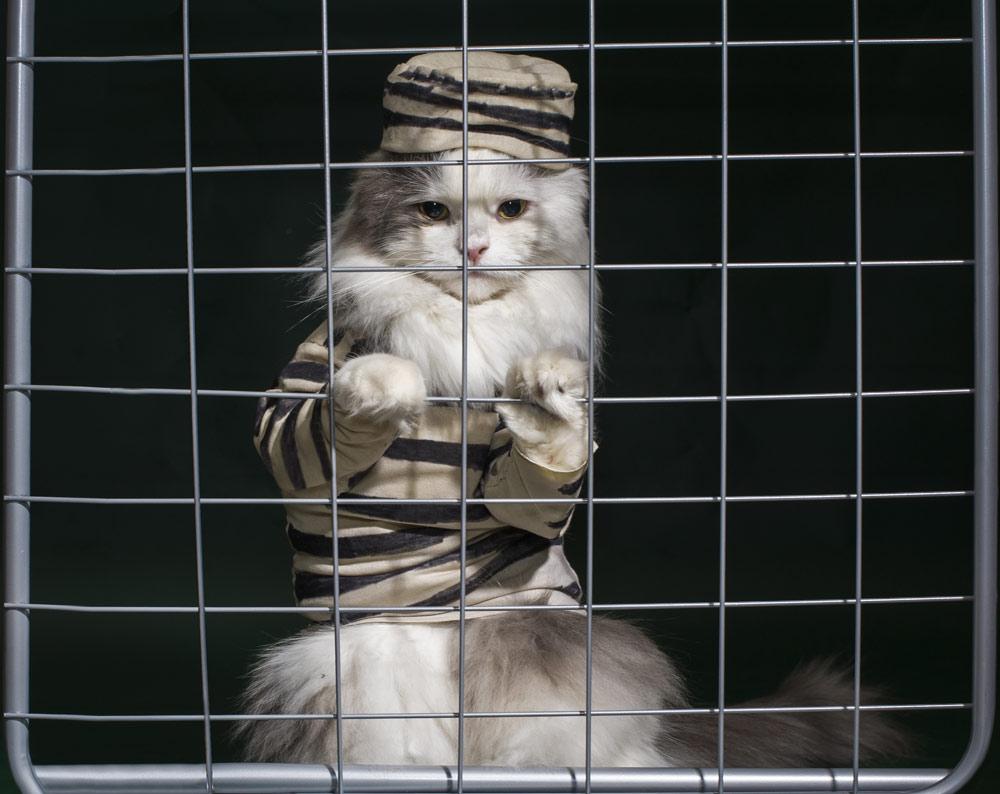 cat-jail.jpg&f=1