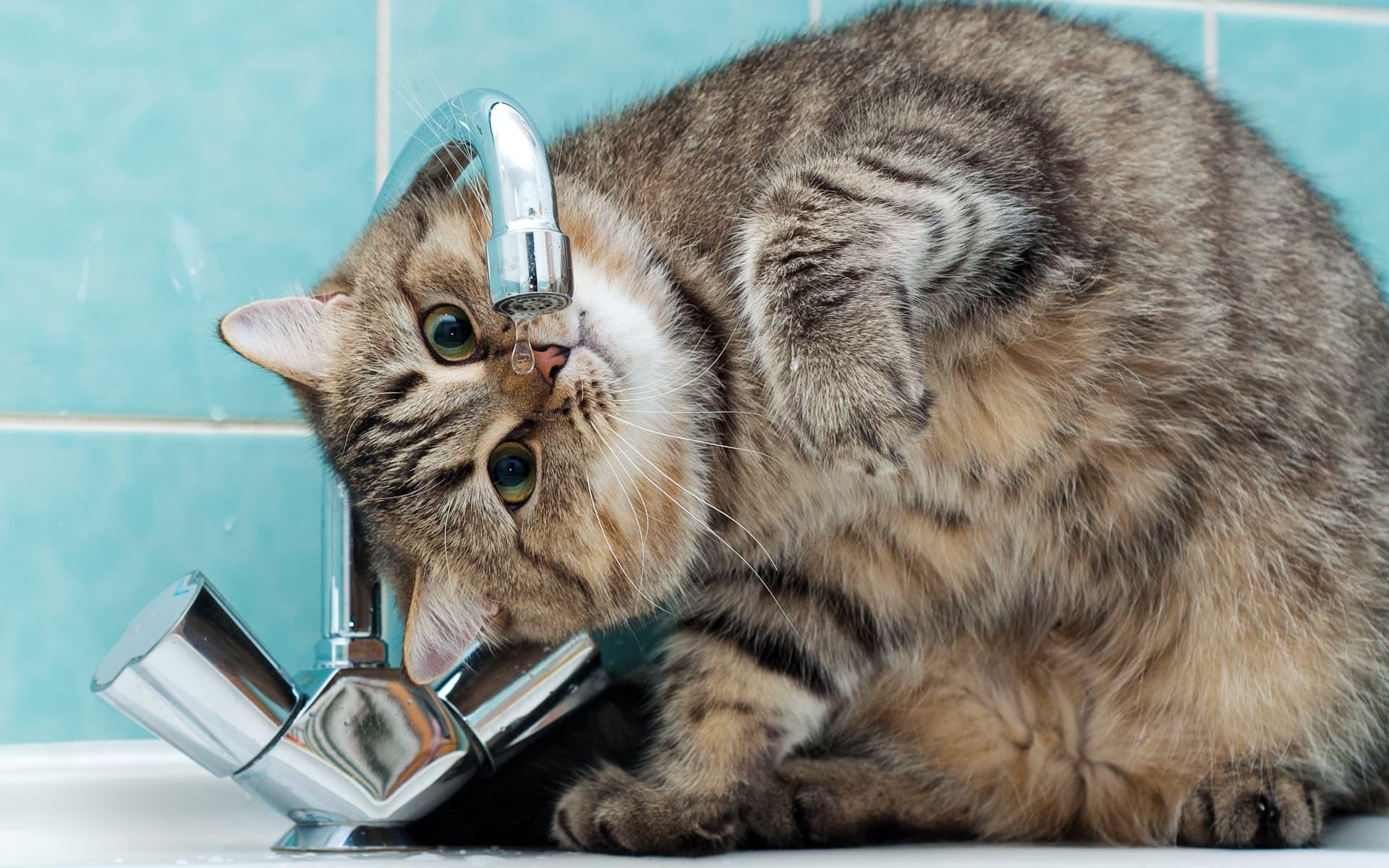 669285-most-popular-funny-cats-wallpaper